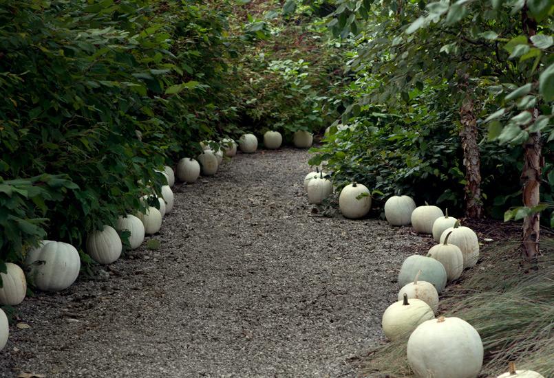 092012_pumpkins_bul-6